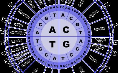 Wat zijn essentiële aminozuren en waar zijn ze te koop?